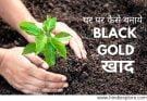 how to make homemade Black gold soil fertile