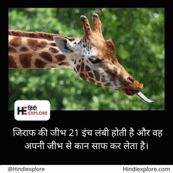 Rochak-hindiexplore-43