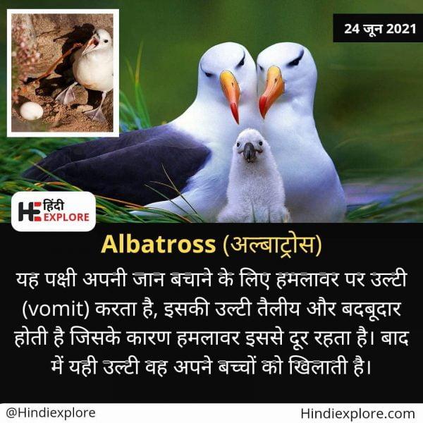 albatross birds facts
