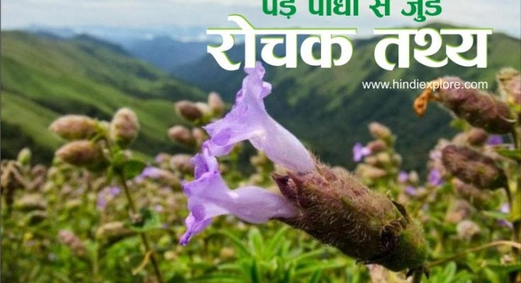 Plants Facts By Hindiexplore