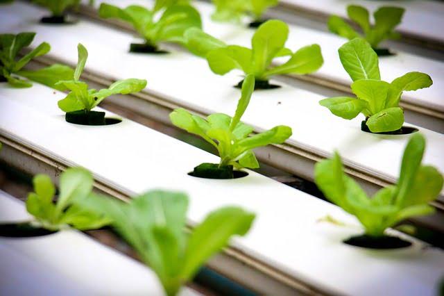 Hydroponic farming business Ideas